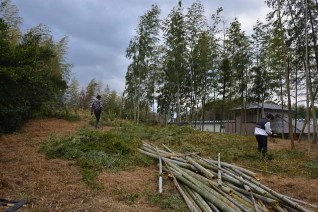 隣地の竹伐採