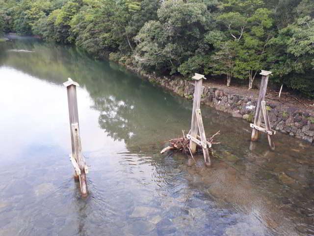 五十鈴川の木除け